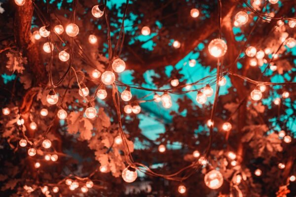 brown-string-lights-in-tree-1124960 (1)